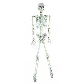 Skelet compleet 160cm