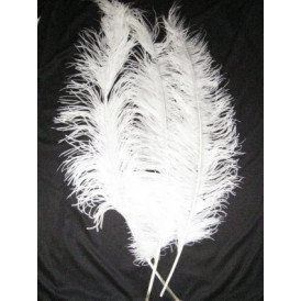 Spadonis veren wit (Piet veren)