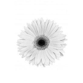 Bloem Gerbera wit met pin en haarclip